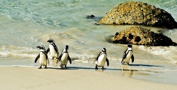 Cape-Town-Penguins-GTASA
