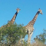 Global Travel Alliance SA  - Day Safari 18