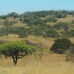 Global Travel Alliance SA  - Day Safari 3