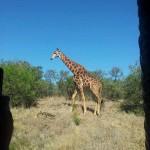 Global Travel Alliance SA  - Day Safari 8