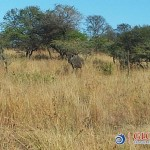 Global Travel Alliance SA  - Day Safari 9