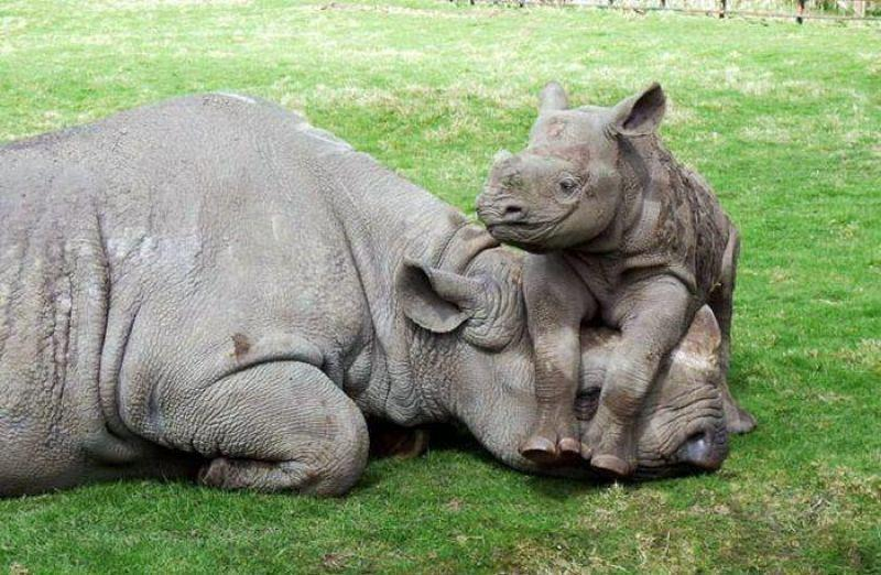 Save the Rhino - Global Travel Alliance SA