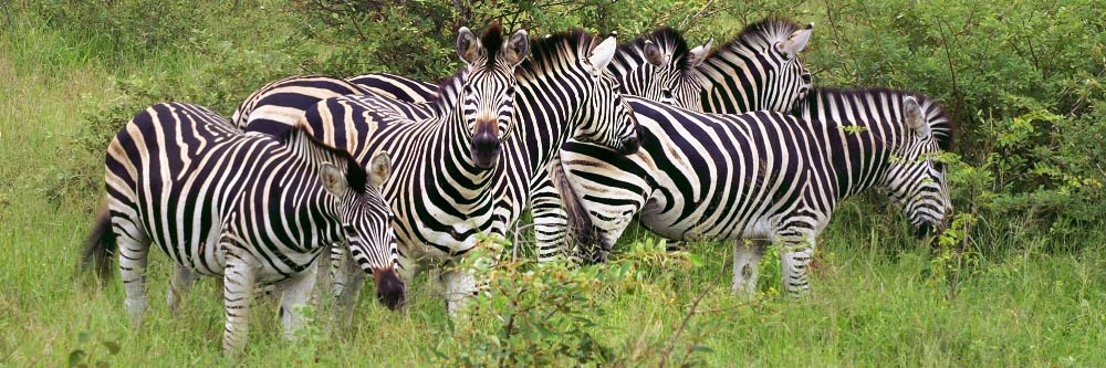 Global Travel Alliance Sa - Zebra
