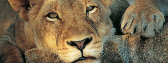 south-african-safari - Global Travel Alliance Sa