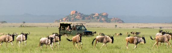 world Safari - Global Travel Alliance Sa