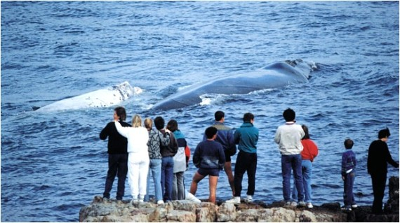 Whale Festival - Global Travel Alliance SA