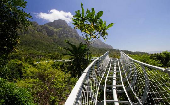 Kirstenbosch Gardens - Boomslang - global travel alliance sa4