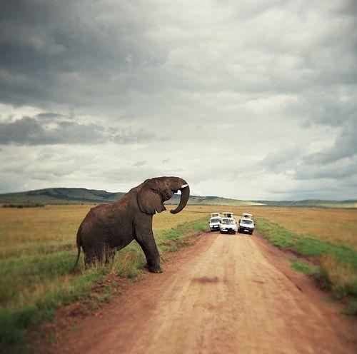 Safaris in South Africa - Kruger