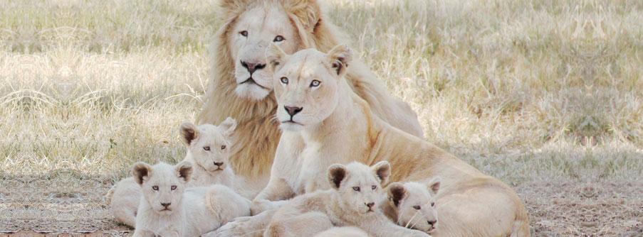 lion Park