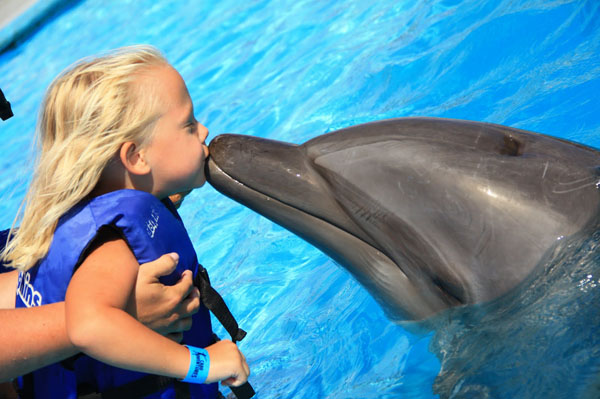 healing power of dolphins - Global Travel Alliance South Africa