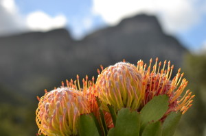 Cape Town - Global Travel Alliance SA