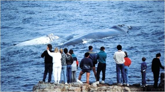 Whale Festival - Global Travel Alliance SA
