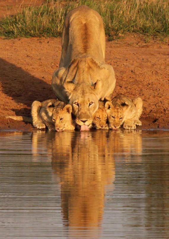 Safaris in South Africa